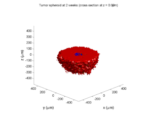 Tumor_spheroid_at_2_weeks__cross_section